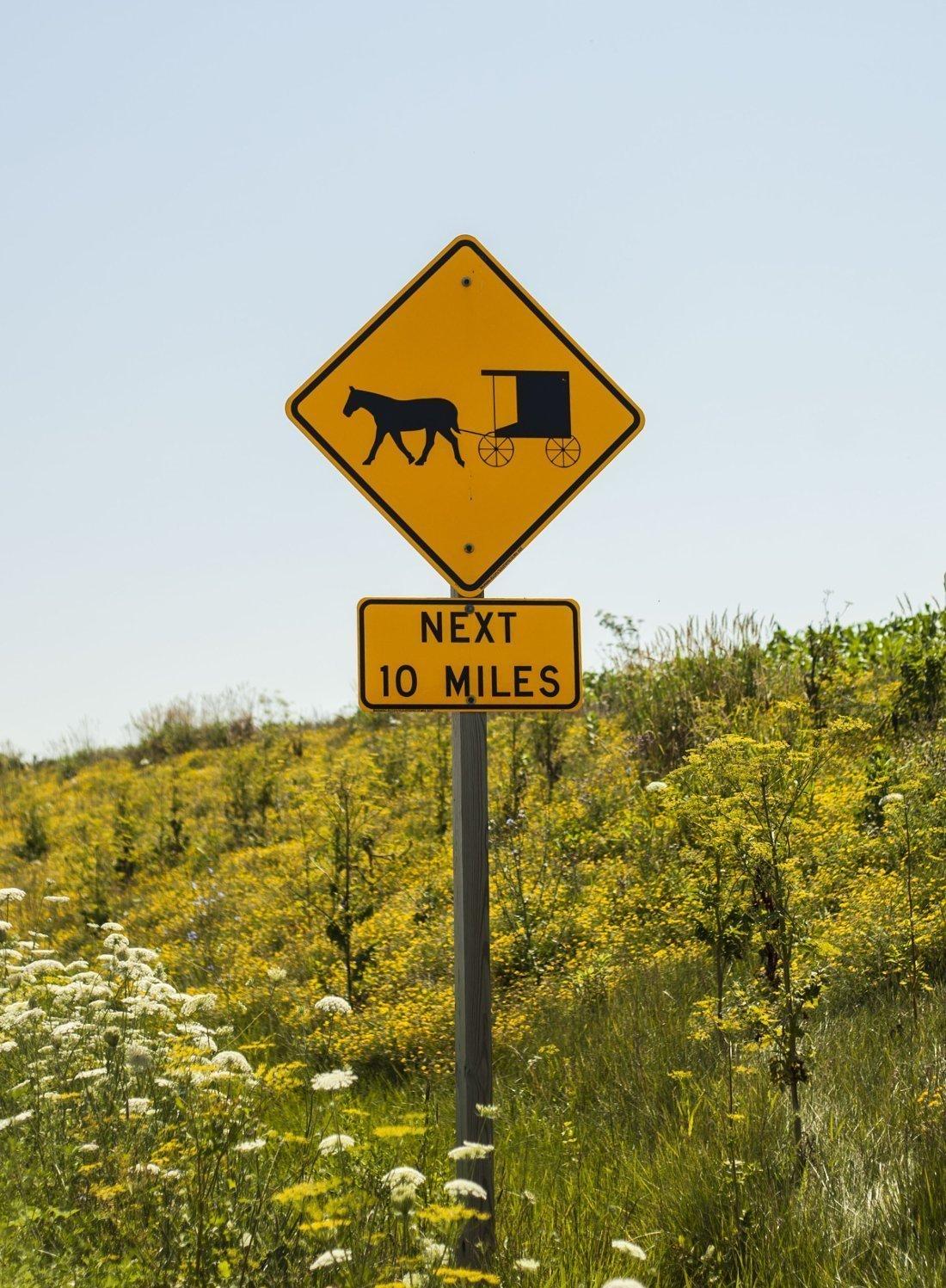 Farmer Feature: Amish Farmers